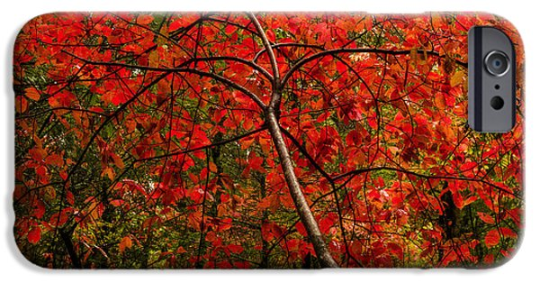 Autumn Season iPhone Cases - Red iPhone Case by Chad Dutson