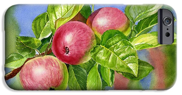 Apple Trees iPhone Cases - Red Cider Apples with Background iPhone Case by Sharon Freeman