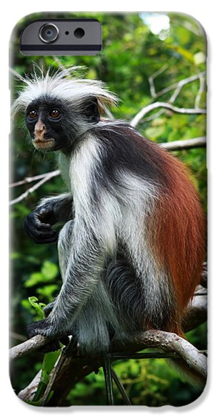 Best Sellers -  - Mangrove Forest iPhone Cases - Red Colobus Monkey iPhone Case by Aidan Moran