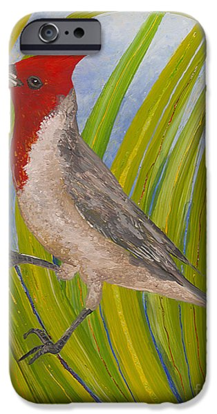 Sheets Glass iPhone Cases - Red-crested Cardinal iPhone Case by Anna Skaradzinska