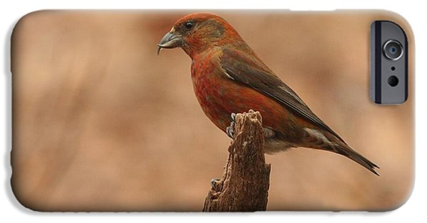 Crossbill iPhone Cases - Red Crossbill iPhone Case by Charles Owens