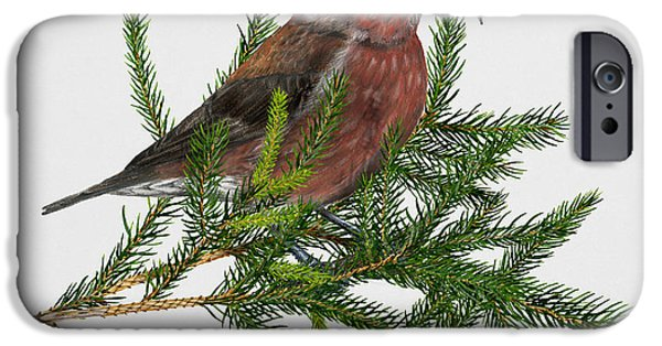 Crossbill iPhone Cases - Red Crossbill -Common Crossbill Loxia curvirostra -Bec-crois des sapins -piquituerto -krossnefur  iPhone Case by Urft Valley Art