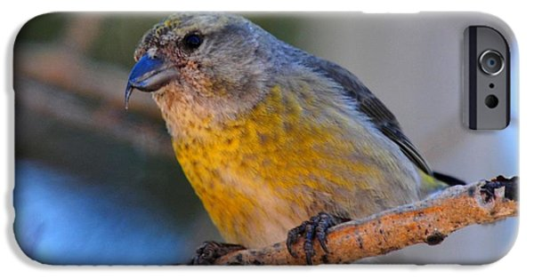 Crossbill iPhone Cases - Red Crossbill female iPhone Case by Marilyn Burton