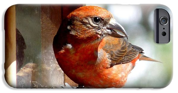 Crossbill iPhone Cases - Red Crossbill iPhone Case by Marilyn Burton