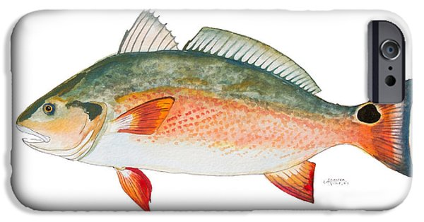 Redfish iPhone Cases - Red Drum iPhone Case by Alexandra Nicole Newton