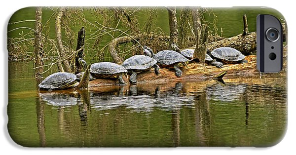 Slider Photographs iPhone Cases - Red Eared Slider Turtles 2 iPhone Case by Sharon  Talson