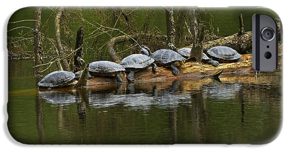 Slider Photographs iPhone Cases - Red-eared Slider Turtles iPhone Case by Sharon  Talson