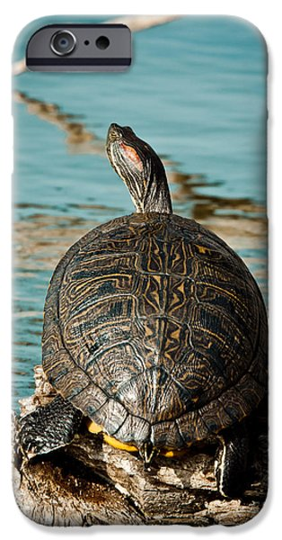 Slider Photographs iPhone Cases - Red Eared Slider XXL iPhone Case by Robert Frederick