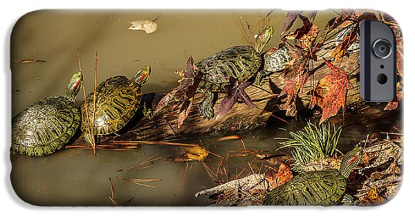 Slider Photographs iPhone Cases - Red Eared Sliders iPhone Case by Mountain Dreams