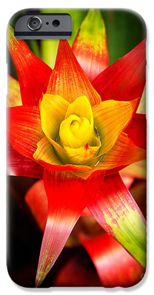 Close Up Floral Pyrography iPhone Cases - Red Exotic Flower 2 iPhone Case by Eyzen M Kim