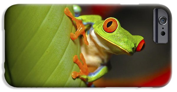 Small iPhone Cases - Red Eyed Leaf Frog iPhone Case by Bob Hislop