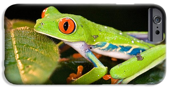 Red Eye iPhone Cases - Red-eyed Tree Frog Agalychnis iPhone Case by Panoramic Images