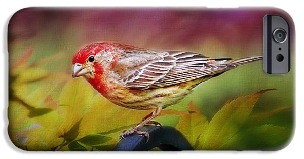 Crossbill iPhone Cases - Red Finch iPhone Case by Darren Fisher