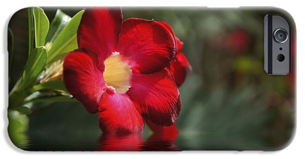 Detail Drawings iPhone Cases - Red Flowers iPhone Case by Aged Pixel