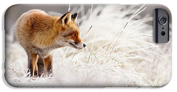 Red Eye iPhone Cases - Red Fox and Hoar Frost _ The Catcher in the Rime iPhone Case by Roeselien Raimond