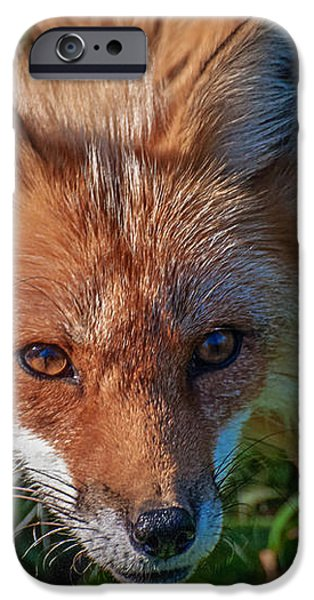 Red Fox iPhone Case by Bianca Nadeau