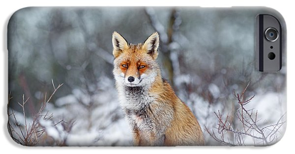 Red Eye iPhone Cases - Red Fox Blue World iPhone Case by Roeselien Raimond