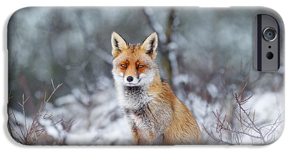 Wild Animals iPhone Cases - Red Fox Blue World iPhone Case by Roeselien Raimond