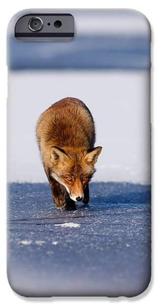 Snow Flake iPhone Cases - Red fox crossing a frozen lake iPhone Case by Roeselien Raimond