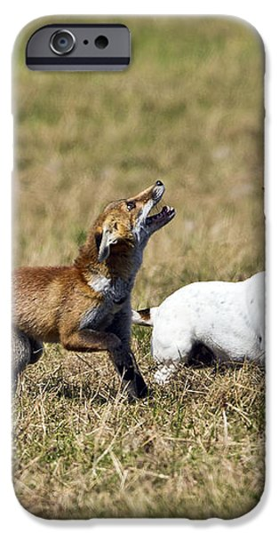 Red Fox Cub And Jack Russell Playing iPhone Case by Brian Bevan