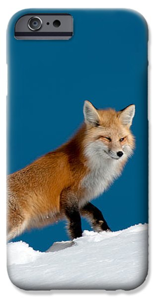 Red Fox iPhone Case by Gary Beeler