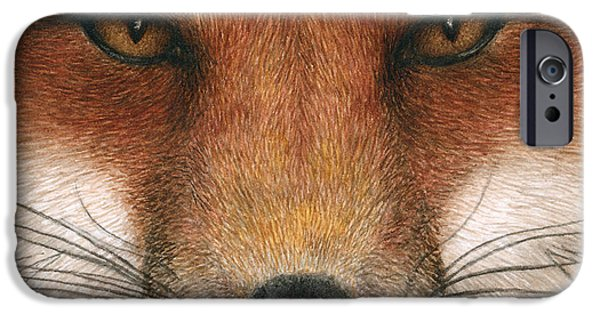 Red Fox iPhone Cases - Red Fox Gaze iPhone Case by Pat Erickson