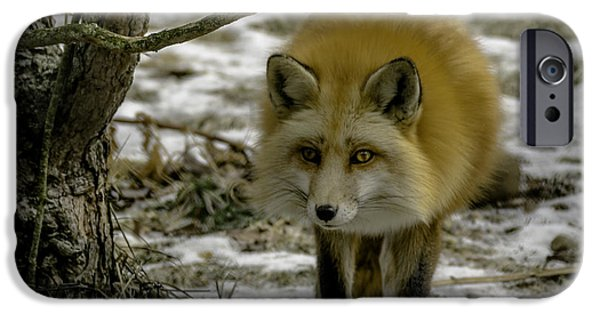 United iPhone Cases - Red Fox I have entered your turf iPhone Case by LeeAnn McLaneGoetz McLaneGoetzStudioLLCcom