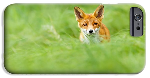 Young iPhone Cases - Red Fox in a Sea of Green iPhone Case by Roeselien Raimond