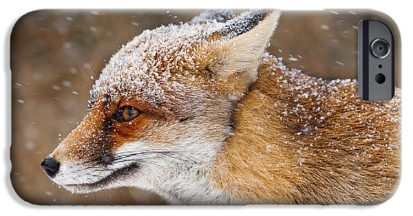 Red Eye iPhone Cases - Red Fox in a Snow Storm iPhone Case by Roeselien Raimond