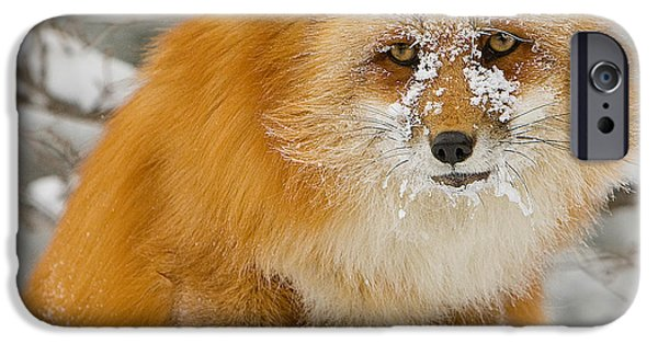Canine Greeting Cards Digital Art iPhone Cases - Red Fox in Snow iPhone Case by Jerry Fornarotto