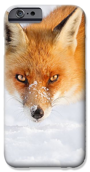 Red Eye iPhone Cases - Red Fox in the Snow iPhone Case by Roeselien Raimond