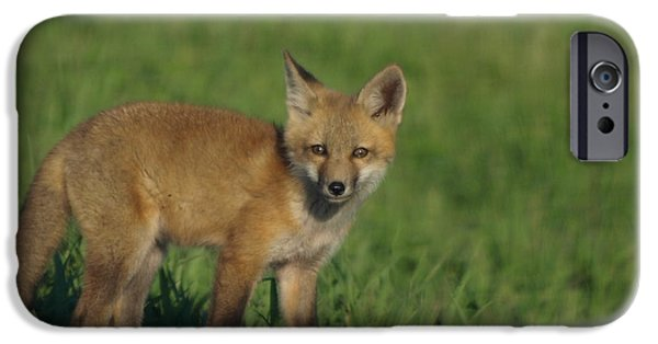 Dog Close-up iPhone Cases - Red Fox KIt iPhone Case by James Peterson