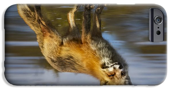 Fox iPhone Cases - Red Fox Reflection iPhone Case by Susan Candelario