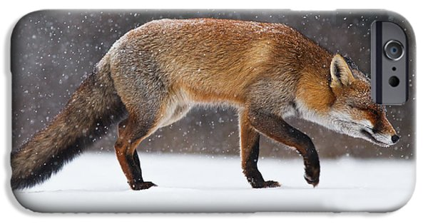 Red Fox iPhone Cases - Red fox trotting through a snowshower iPhone Case by Roeselien Raimond