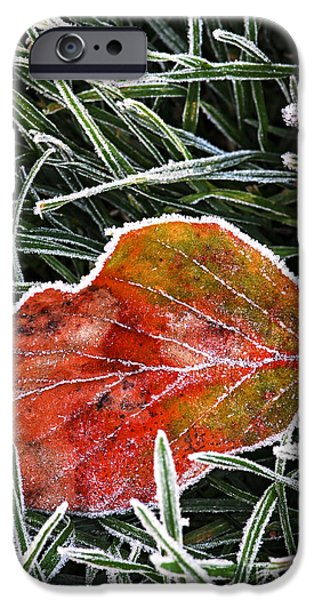 Winter Mornings iPhone Cases - Red frosty leaf on frozen ground iPhone Case by Elena Elisseeva