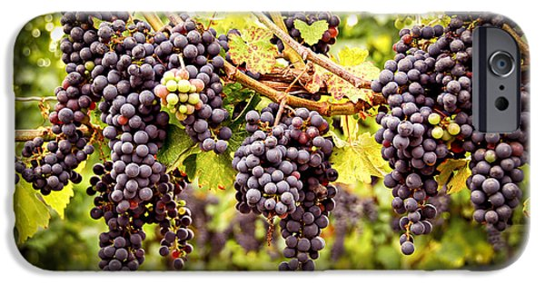 Agricultural iPhone Cases - Red grapes in vineyard iPhone Case by Elena Elisseeva