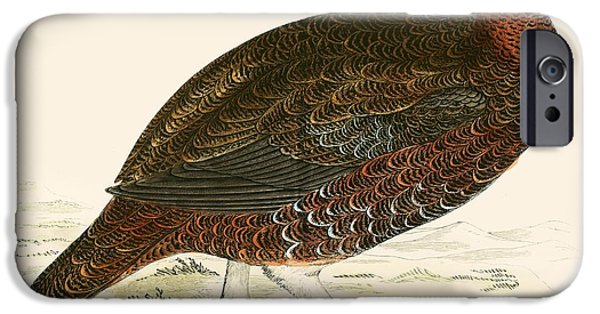 Hunting Bird iPhone Cases - Red Grouse iPhone Case by Beverley R. Morris