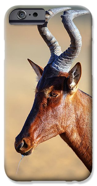 Close iPhone Cases - Red hartebeest portrait iPhone Case by Johan Swanepoel