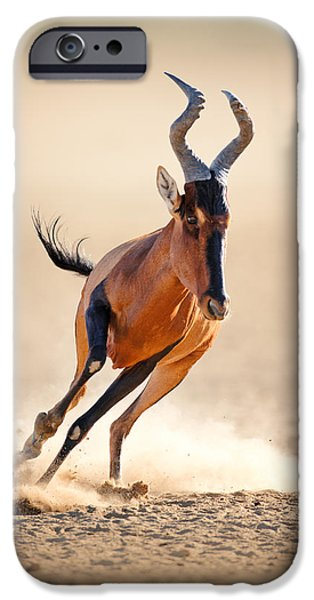 Run iPhone Cases - Red hartebeest running iPhone Case by Johan Swanepoel