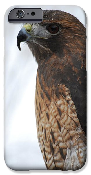 Preditor iPhone Cases - Red Hawk I iPhone Case by Sharon Elliott