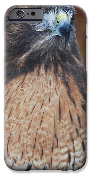 Preditor iPhone Cases - Red Hawk II iPhone Case by Sharon Elliott