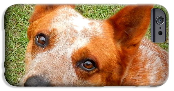 Canine Greeting Cards Digital Art iPhone Cases - Red Heeler iPhone Case by Lynn Griffin