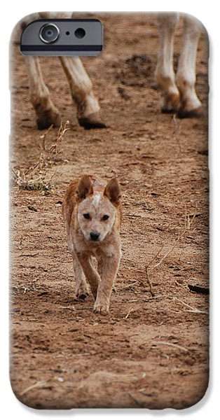 Eastern Wild Turkey iPhone Cases - Red Heeler iPhone Case by Thea Wolff