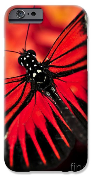 Vivid iPhone Cases - Red heliconius dora butterfly iPhone Case by Elena Elisseeva