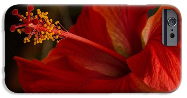 Multimedia iPhone Cases - Red Hibiscus 4 iPhone Case by Frank Mari