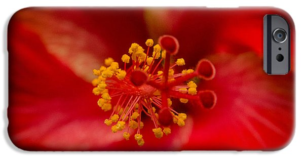 Multimedia iPhone Cases - Red Hibiscus 7 iPhone Case by Frank Mari