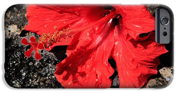 Interior Still Life iPhone Cases - Red Hibiscus iPhone Case by Cheryl Young