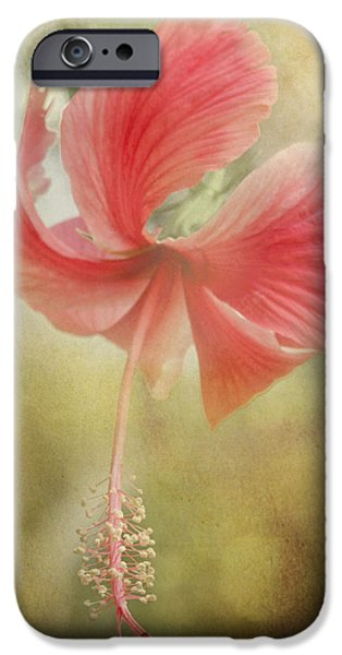 Althea iPhone Cases - Red Hibiscus iPhone Case by David and Carol Kelly
