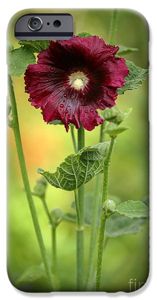Florida Flowers Photographs iPhone Cases - Red Hollyhock iPhone Case by Sabrina L Ryan