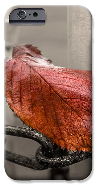 Red Leaf on Gate  iPhone Case by Chris Tobias